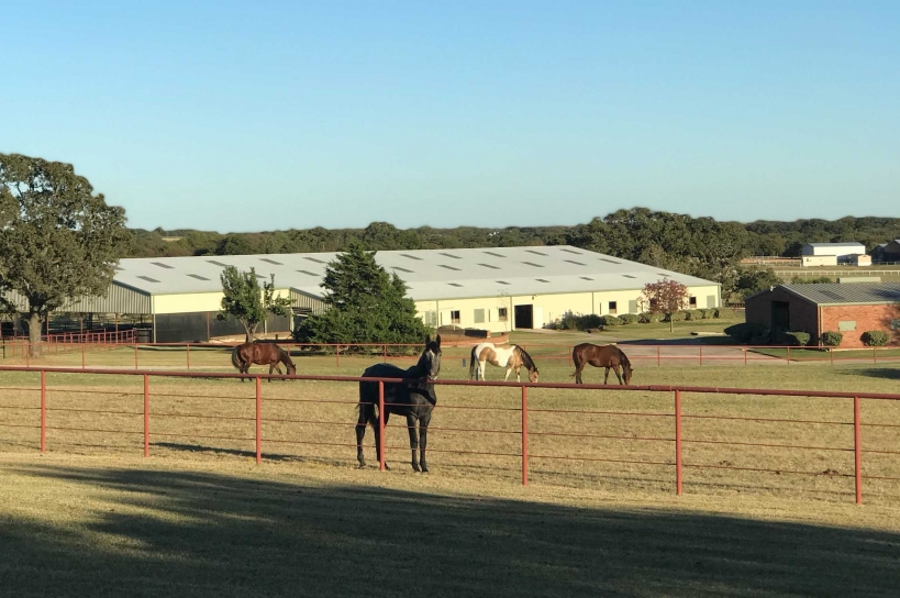 Petschenig Showjumpers farm in Pilot Point, Texas.