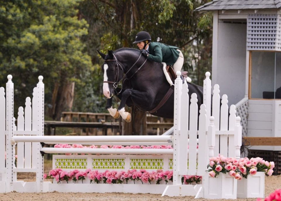 Bastille in Young Hunters at Sonoma Horse Park pc: GrandPix