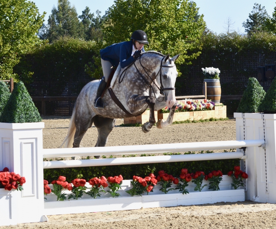 Devout in Performance Hunters at Sonoma Horse Park pc: GrandPix