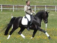 Rubignon - Producer of Dressage and Hunters
