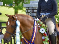 Jessandi Famous Amos Pony Finals Welsh Champion
