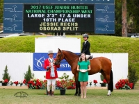 Split Jr hunter/ Equitation