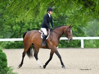 hunters equitation jumpers for sale european-sporthorses
