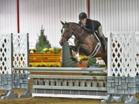 childrens adult hunter for sale european-sporthorses