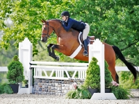 Oboras Split Jr hunter/ equitation