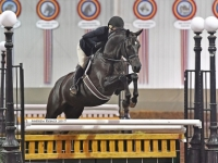 successful young hunters for sale european-sporthorses
