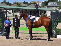 "All Heart ""Poppy"" 2009 Irish Sport Horse by Puissance. Has won everything across the country with YR."