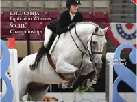 Big eq horse for sale