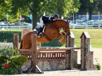 2012 Imported Hanoverian Gelding