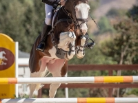 Cassio's Picasso -- USEA Stallion of the Year