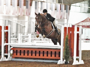 Hunters- Equitation- Jumpers. young and proven. European-Sporthorses