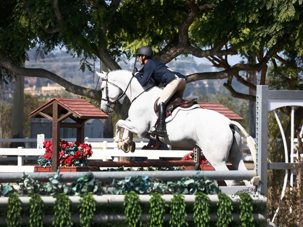 Elegante, shown by Greg Solente in the Performance Hunters, Imported 7 yr old Holstiener,